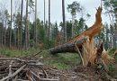 Połamane drzewa i zerwany dach – <br>w regionie trwa usuwanie skutków wichury.