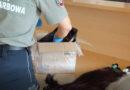 Nietypowy przemyt. Obywatel Ukrainy przemycał kartonowe pudło pełne ludzkich włosów.