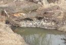 Strach przed wielką wodą. Mieszkańcy interweniują w sprawie rzeki Budzisz