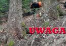 Śmiertelnie niebezpieczne pułapki w ropczyckim lesie. Stalowe linki między drzewami